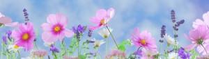 wild-flowers-571940_1920_bearbeitet
